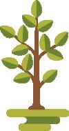 arvores-crescendo-mahogany-roraima (1)