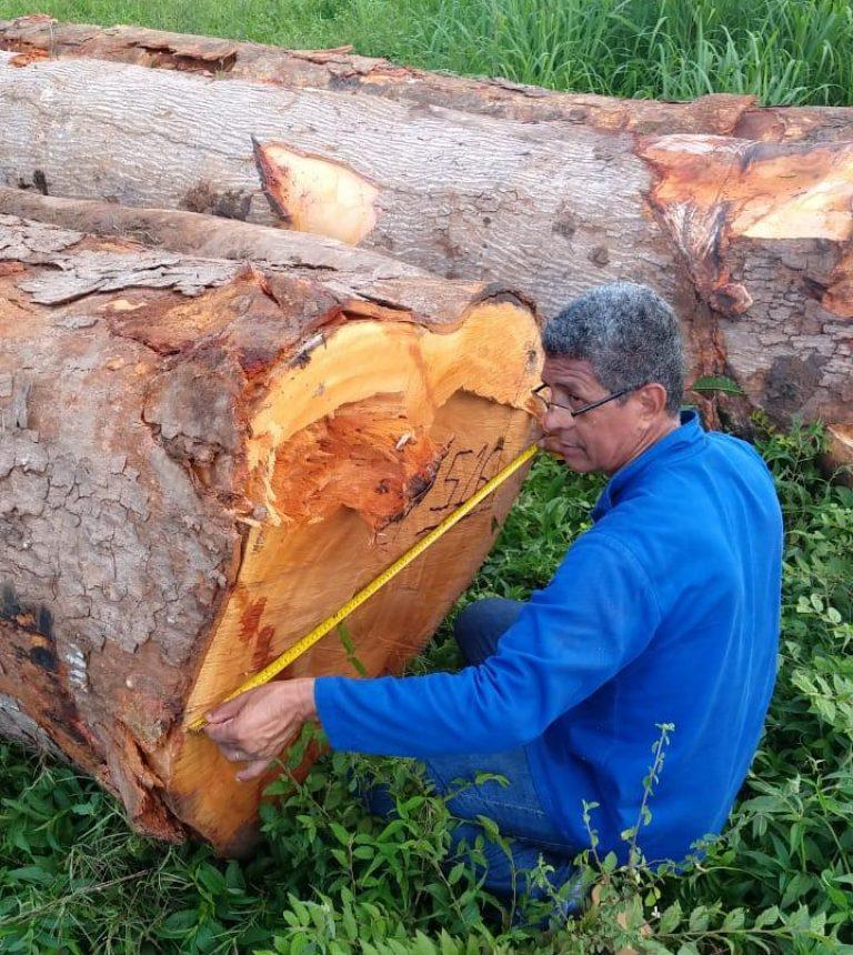 mahogany-horaima-about-us (1)